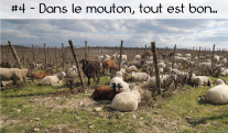 image Croquons_garrigue4.png (2.0MB)